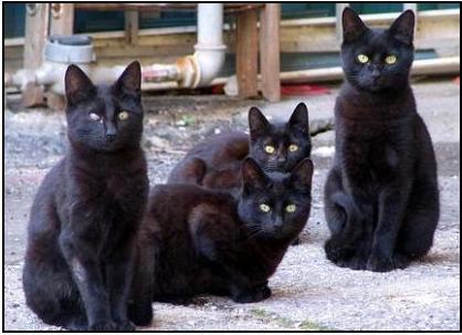 quattro gatti neri di Roma....noi non riusciamo a non pensare a Rudy...nel corridoio per andare dalla cucina in camera faccio un giro largo per evitare la ciotola dell'acqua di Rudy ossia il posto dove era...amore mio! dans gatti